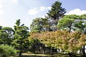 美丽的夏天风景 — 图库照片