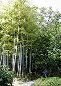 Green bamboo forest — 图库照片