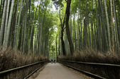 Bamboo grove in Arashiyama in Kyoto, Japan — Stock Photo