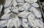 新鮮な魚、魚の市場で氷の上 — ストック写真