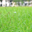 Stock Photo: Long grass meadow closeup