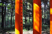 Column of Torii gates againts the nature at Fushimi Inari Shrine — Foto Stock