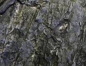 Wet stone sea coast — Stock Photo
