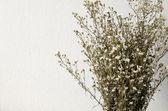 Sušená kytice bílých květů — Stock fotografie