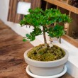 Tiny plant in pot — Stock Photo