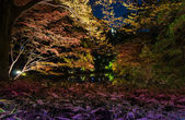 Seasonal illuminations at Rikugien Garden — Stock Photo