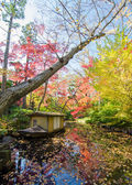 Japanese garden in autumn — Photo