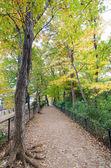 Осенний путь в лесу — Стоковое фото