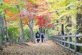 People walking in colorful autumn forest — Stock Photo