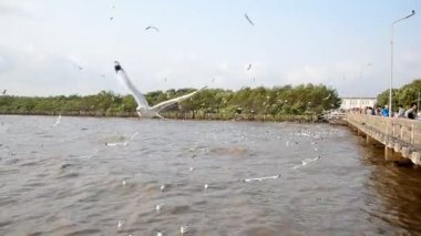 Flying seagull at Bangpoo — Vídeo de Stock