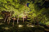 Seasonal illuminations at Rikugien Garden — Stock Photo