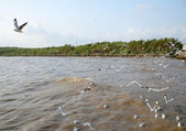 Seagull is a bird migration to Bangpoo — Foto Stock
