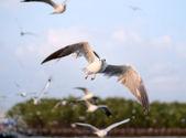 летающие чайки в действии на bangpoo — Стоковое фото