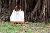 Canvas Bags with Banyan Tree — Stock Photo
