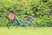 Vintage bicycle with flower background — Stock Photo