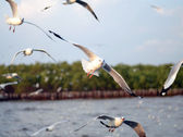 Seagulls in action at ocean, Bangpoo, Thailand  — Stock Photo