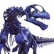 Tyrannosaurus rex skeleton on white — Stock Photo