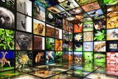 Inside the nature showroom — Stock Photo