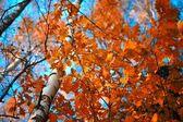 Autumn sky leaf — Stock Photo