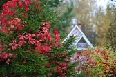 Autumn forest house — Stock Photo