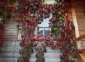 Leaf window — Stock Photo