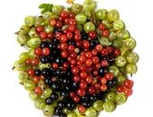 Berries gooseberry currant — Stock Photo