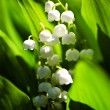Lily of the valley in spring garden — Stock Photo