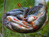Fishing cage perch — Stock Photo