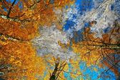 Autumn-winter brunch — Stock Photo