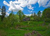 Cabana na floresta — Foto Stock