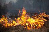 çimenler bahar ateş — Stok fotoğraf