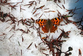 Butterfly spring snow — Stock Photo