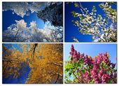 Four seasons. Nature in spring, summer, autumn and winter. — Stock Photo