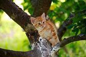 Cat pretty siesta — Stock Photo