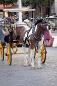 Traditional horses carriages of Seville — Stock Photo