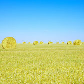 Hay rolls, blue sky and yellow field in summer. — Stock Photo