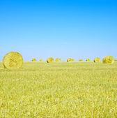 Siano rolki, niebieski niebo i żółte pole w lecie. — Zdjęcie stockowe