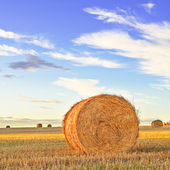 Hay roll, blue sky and field at sunset. Tuscany — Stock fotografie