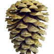 Christmas Golden Pine Cone decoration isolated on white — Stock Photo