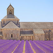 Senanque Abbey blooming lavender flowers detail. Gordes, Luberon — Foto de Stock