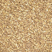 Spelt organic wheat raw cereal close up texture or background — Stock Photo