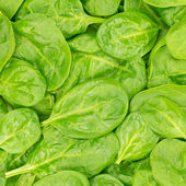 Fresh Organic Baby Spinach background or texture. Raw food. — Stock Photo