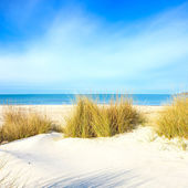 Grass on a white sand dunes beach, ocean and sky — Stock Photo