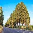 Bolgheri famous cypresses tree boulevard landscape. Tuscany landmark, Italy — Stock Photo
