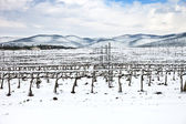 Vineyards rows covered by snow in winter. Chianti, Florence, Italy — Stock Photo