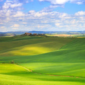 Tuscany, Crete Senesi green fields and rolling hills landscape, Italy. — Stock Photo