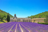 Abbey of Senanque blooming lavender flowers. Gordes, Luberon, Pr — Foto Stock