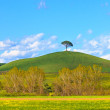 Tuscany, Green fields and lonely pine tree landscape, Siena, Italy. — Stock Photo