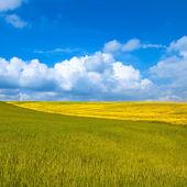 Paisagem rural. campo verde e amarelo, com céu azul nublado — Fotografia Stock