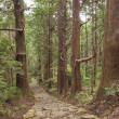 Royalty-Free Stock Photo: Tree Forest and Stone Trail in Kumano Pilgrimage Route. Kansai, Japan, Asia. Unesco Site